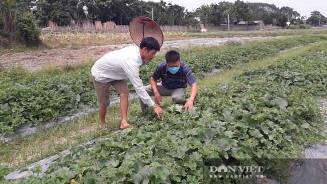 Trồng đủ các loại rau củ quả mùa nào thức nấy, nông dân ở đây khấm khá hơn hẳn - Ảnh 6.