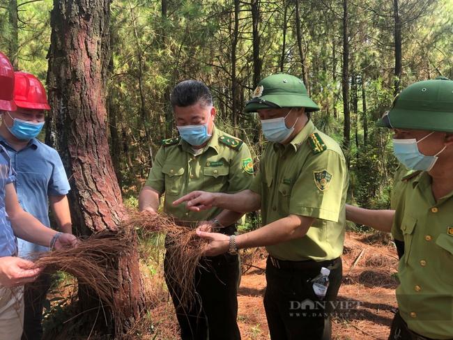 Ứng phó với nguy cơ cháy rừng ngày nắng nóng - Ảnh 2.