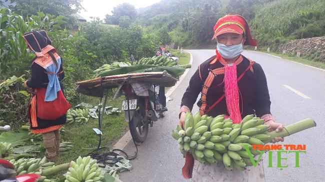 Lai Châu: Trồng chuối trên nương đồi, dân vùng này khấm khá - Ảnh 2.