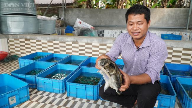Nam Định: Bỏ làm công nhân về quê nuôi ba ba, 8x đổi đời, thu tiền tỷ mỗi năm  - Ảnh 1.