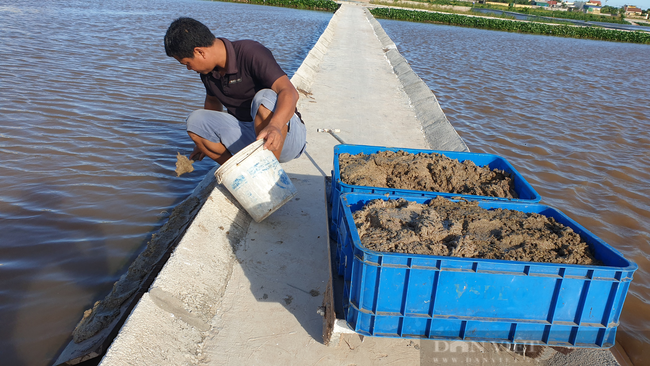 Nam Định: Bỏ làm công nhân về quê nuôi ba ba, 8x đổi đời, thu tiền tỷ mỗi năm  - Ảnh 2.