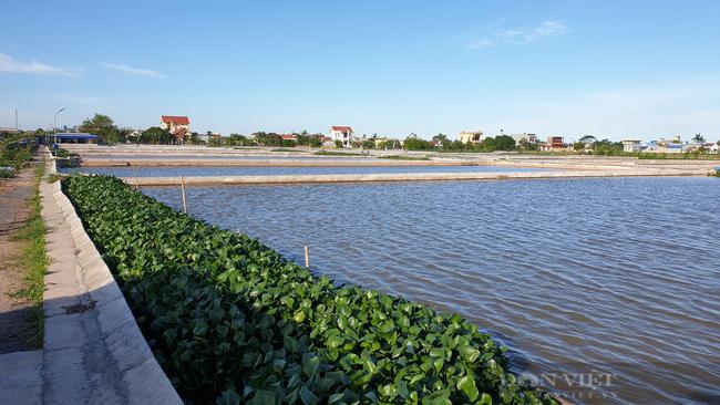 Nam Định: Bỏ làm công nhân về quê nuôi ba ba, 8x đổi đời, thu tiền tỷ mỗi năm  - Ảnh 4.