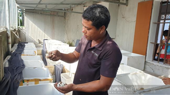 Nam Định: Bỏ làm công nhân về quê nuôi ba ba, 8x đổi đời, thu tiền tỷ mỗi năm  - Ảnh 5.