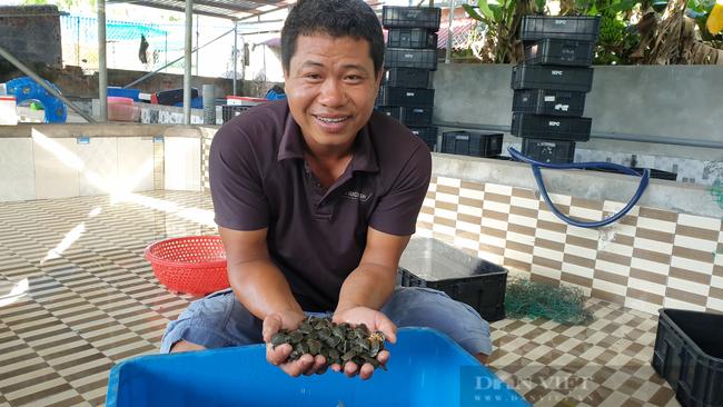 Nam Định: Bỏ làm công nhân về quê nuôi ba ba, 8x đổi đời, thu tiền tỷ mỗi năm  - Ảnh 6.