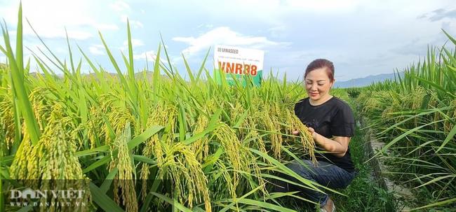 Giống lúa của Vinaseed ghi dấu ấn trên đất xứ Mường như thế nào? - Ảnh 1.