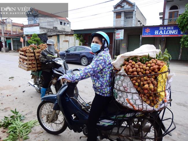 Quảng Ninh: Vải thiều chín đỏ, chủ vườn ra ngóng vào trông thương lái đến thu mua