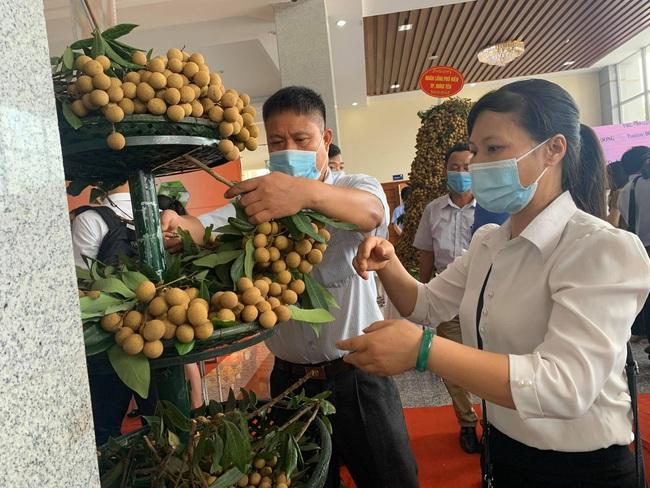 Hưng Yên đưa 1 trong 50 loại trái cây ngon nhất Việt Nam lên đường sang Mỹ, EU - Ảnh 2.