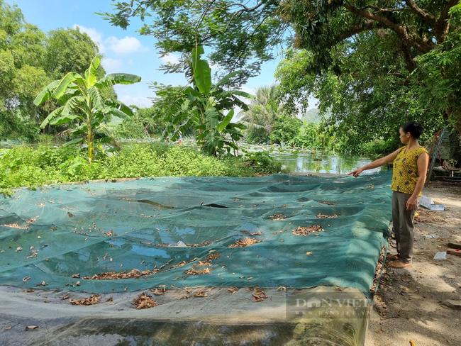 """Ninh Bình: Hàng chục hộ dân làng Quang Hiển """"khát nước"""" sạch sinh hoạt - Ảnh 6."""