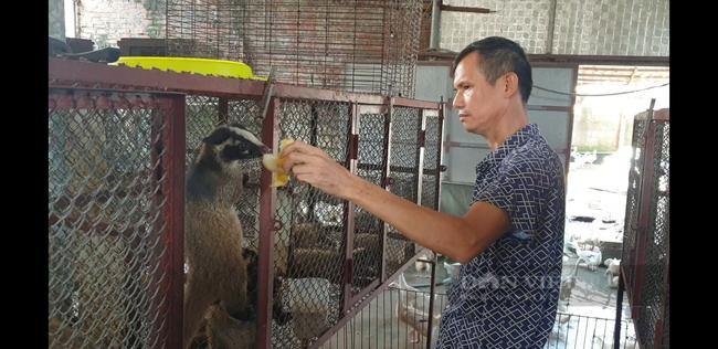 Nam Định: Nuôi con chỉ cho ăn chuối, cháo loãng qua ngày, lão nông này kiếm tiền tỷ - Ảnh 1.