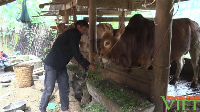 Hà Giang: Huyện Đồng Văn, Mèo Vạc bảo vệ chặt đàn trâu, bò trước dịch bệnh viêm da, nổi cục - Ảnh 1.