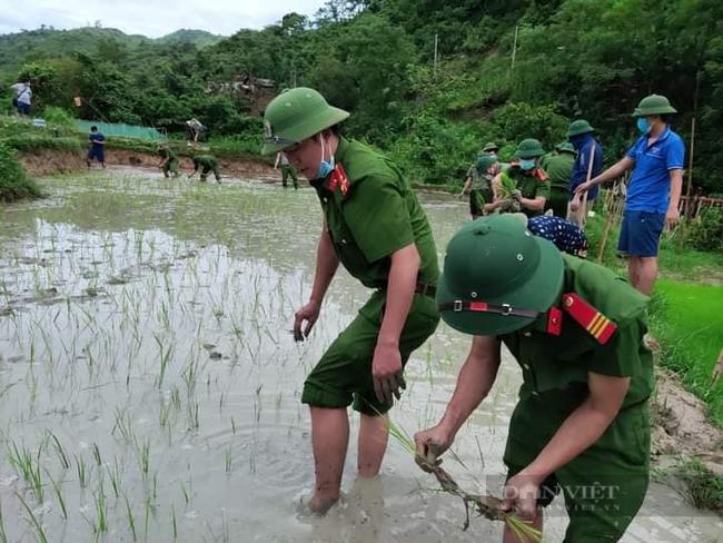 Nghệ  Ann: Các lực lượng tham gia nhổ mạ và cấy lúa giúp dân nơi tâm dịch Chằm Puông - Ảnh 2.