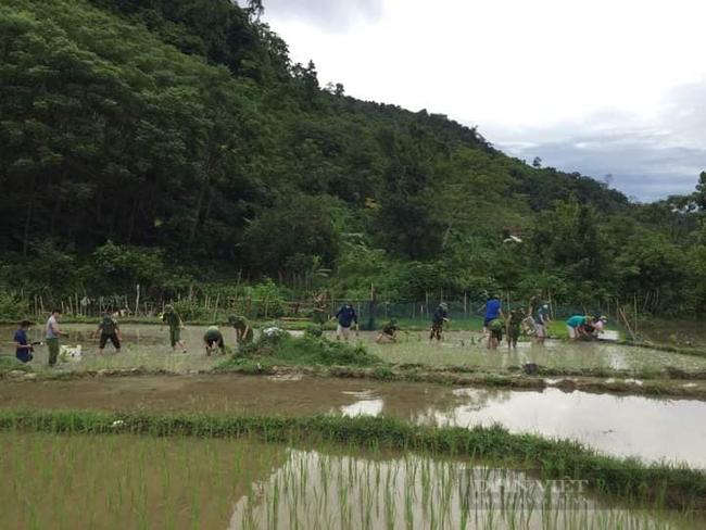 Nghệ  Ann: Các lực lượng tham gia nhổ mạ và cấy lúa giúp dân nơi tâm dịch Chằm Puông - Ảnh 3.