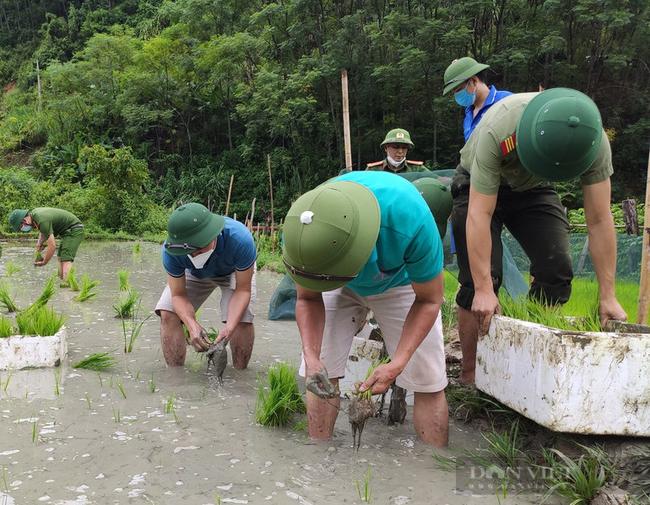 Nghệ  Ann: Các lực lượng tham gia nhổ mạ và cấy lúa giúp dân nơi tâm dịch Chằm Puông - Ảnh 5.