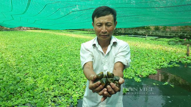 Ninh Bình: Nuôi con thích ở trong bóng mát, chỉ ăn bèo và lá sắn, lão nông thu nhập khủng - Ảnh 1.