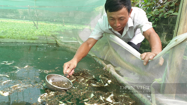 Ninh Bình: Nuôi con thích ở trong bóng mát, chỉ ăn bèo và lá sắn, lão nông thu nhập khủng - Ảnh 5.