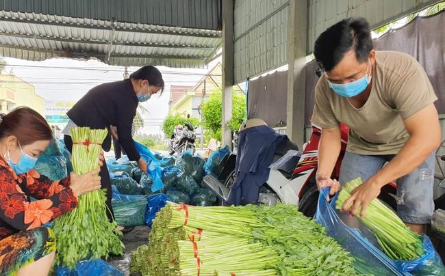 Thu hoạch nhiều mà thương lái ít, cần giải vây hàng trăm tấn rau xóa đói giảm nghèo ở Bạc Liêu - Ảnh 6.