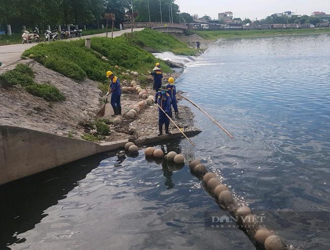 Công ty Thoát nước Hà Nội lý giải nguyên nhân cá chết hàng loạt ở hồ Yên Sở - Ảnh 5.