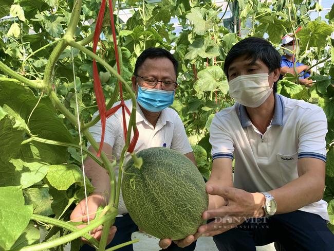 Hội Nông dân Quảng Bình xây nhà màng trồng rau sạch làm điểm trình diễn cho nông dân - Ảnh 2.