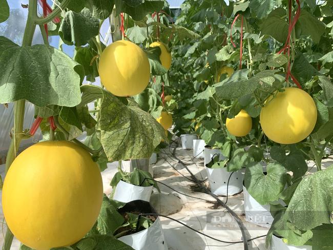 Hội Nông dân Quảng Bình xây nhà màng trồng rau sạch làm điểm trình diễn cho nông dân - Ảnh 3.