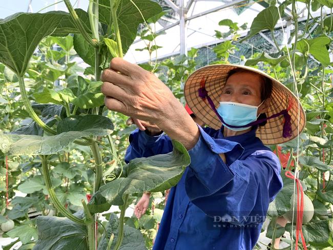 Hội Nông dân Quảng Bình xây nhà màng trồng rau sạch làm điểm trình diễn cho nông dân - Ảnh 4.