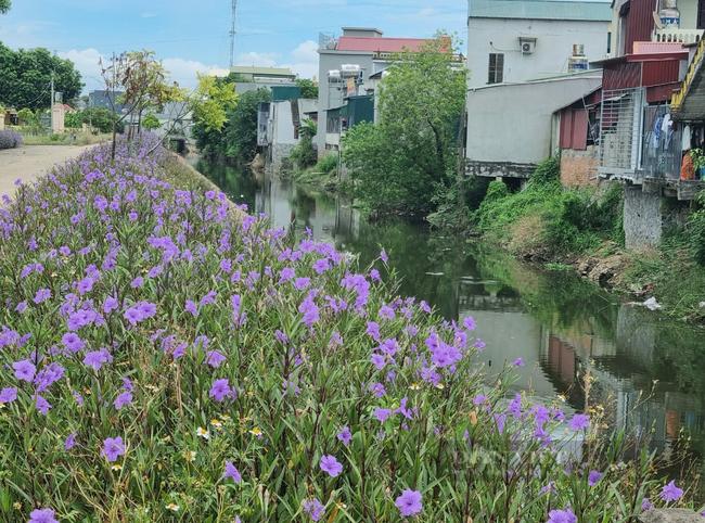 Ninh Bình: Huyện Nho Quan trên đường về đích nông thôn mới - Ảnh 4.