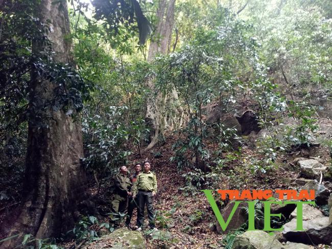 Lai Châu: Nậm Chà chú trọng công tác quản lý, bảo vệ và phát triển rừng  - Ảnh 1.