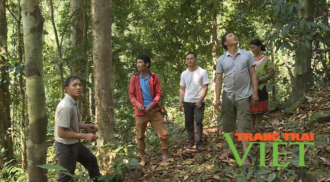 Lai Châu: Nậm Chà chú trọng công tác quản lý, bảo vệ và phát triển rừng  - Ảnh 3.