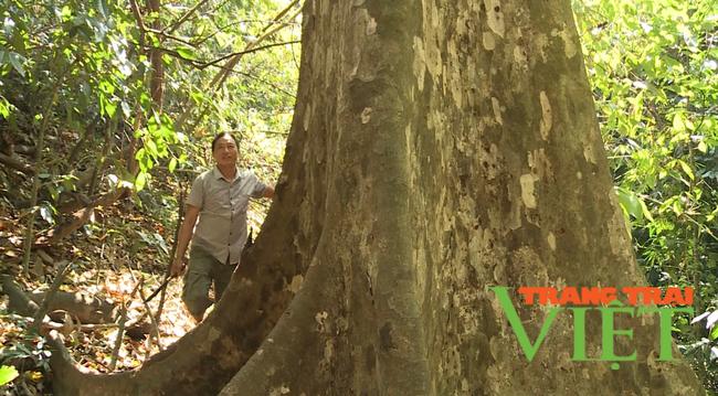 Lai Châu: Nậm Chà chú trọng công tác quản lý, bảo vệ và phát triển rừng  - Ảnh 4.