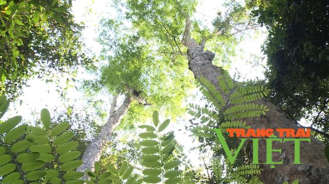 Lai Châu: Nậm Chà chú trọng công tác quản lý, bảo vệ và phát triển rừng  - Ảnh 5.