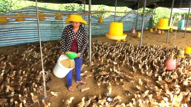 Tây Ninh: Hàng triệu con gà đã phải đốt bỏ vì khó tiêu thụ - Ảnh 3.