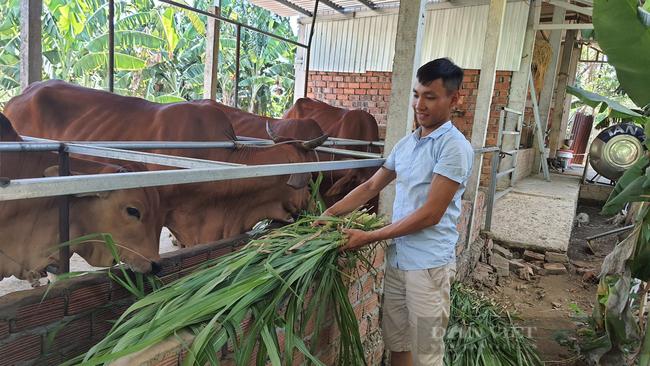"""Chàng trai 9X xứ Quảng """"bỏ túi"""" hơn 200 triệu mỗi năm nhờ nuôi bò 3B nhốt chuồng - Ảnh 1."""