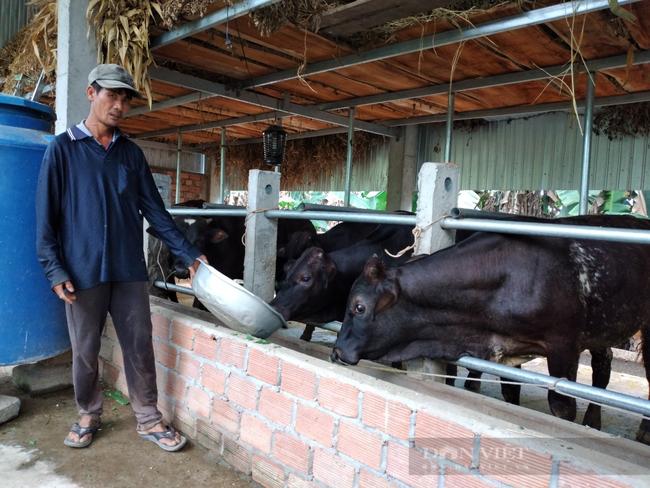 """Chàng trai 9X xứ Quảng """"bỏ túi"""" hơn 200 triệu mỗi năm nhờ nuôi bò 3B nhốt chuồng - Ảnh 3."""