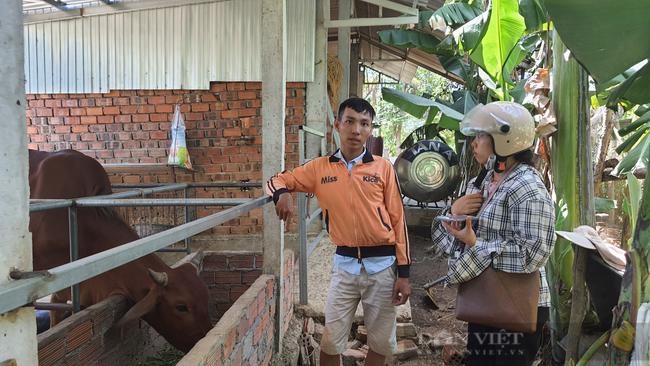 """Chàng trai 9X xứ Quảng """"bỏ túi"""" hơn 200 triệu mỗi năm nhờ nuôi bò 3B nhốt chuồng - Ảnh 5."""