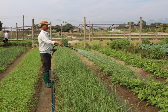 Vốn Hội đưa nông dân chạm mốc thu nhập tiền tỷ - Ảnh 1.