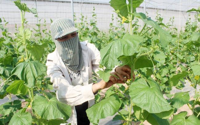 Tổ công tác chỉ đạo sản xuất, tiêu thụ nông sản phía Bắc - Ảnh 1.