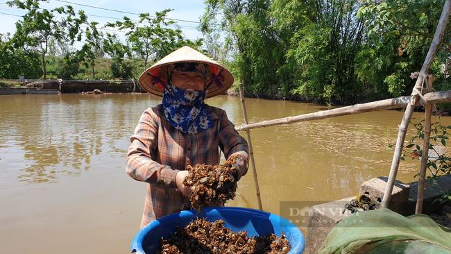 Ninh Bình: Đặc sản dân phố ai cũng thèm, nhưng ở đây lại chạy đầy ngoài ruộng, dùng tay vơ cũng không xuể - Ảnh 5.