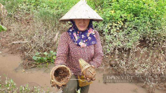 Ninh Bình: Đặc sản dân phố ai cũng thèm, nhưng ở đây lại chạy đầy ngoài ruộng, dùng tay vơ cũng không xuể - Ảnh 3.