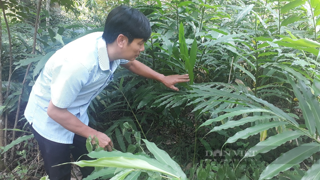 Ôm đống nghề, ông nông dân ở Lai Châu thu cả tỷ đồng mỗi năm - Ảnh 3.