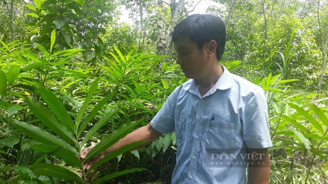 Ôm đống nghề, ông nông dân ở Lai Châu thu cả tỷ đồng mỗi năm - Ảnh 5.