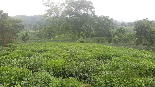 Thái Nguyên: Tái cơ cấu nông nghiệp đóng vai trò quan trọng trong xây dựng nông thôn mới - Ảnh 1.