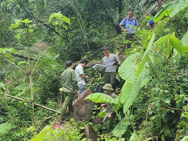 Vụ phá rừng quy mô lớn ở Hà Giang: Bắt tạm giam 5 đối tượng, tạm giữ hình sự 2 đối tượng - Ảnh 1.