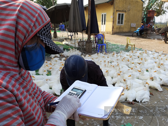 Giá gia cầm hôm nay 13/8: Giá gà công nghiệp có xu hướng giảm, gà ta bán tại chợ giá cao - Ảnh 2.
