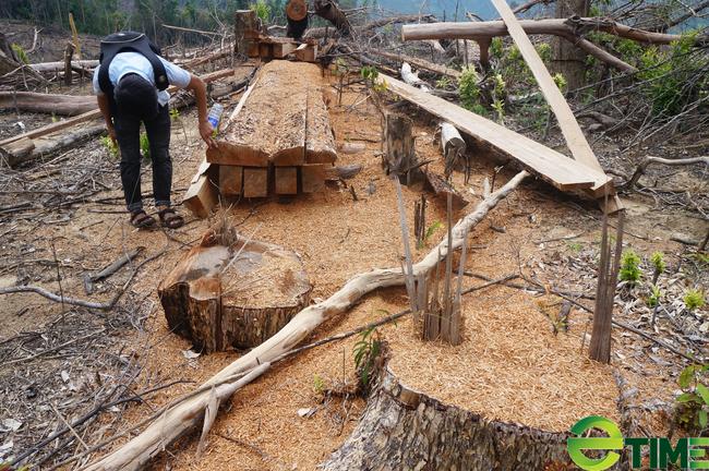 Quảng Nam: 9X phá rừng bị phạt 70 triệu đồng - Ảnh 1.