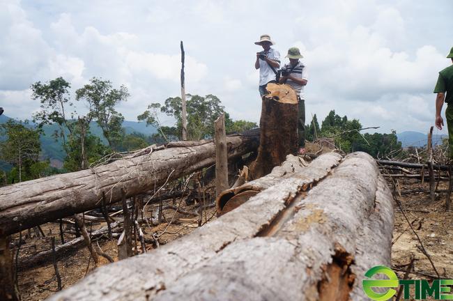 Quảng Nam: 9X phá rừng bị phạt 70 triệu đồng - Ảnh 2.