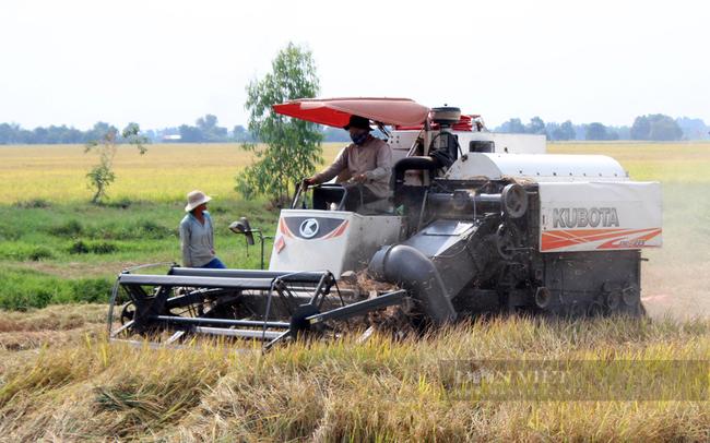 Nông dân thu hoạch lúa ở Châu Thành, Tây Ninh. Ảnh: Nguyên Vỹ