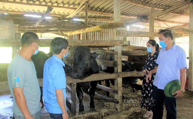 Nông dân Hà Tĩnh nuôi giống bò nặng cả tấn, thịt đặc biệt, mỗi năm lãi ròng hàng trăm triệu - Ảnh 2.