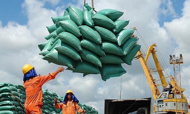 Giá gạo xuất khẩu thấp nhất trong 2 năm, thêm nỗi lo Tân Cảng tạm ngừng dịch vụ đóng rút gạo - Ảnh 1.