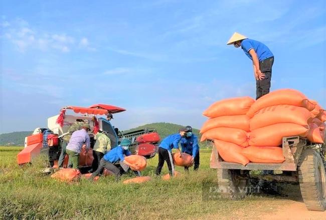 """Nghệ An: Nông dân tự giác phòng dịch, """"áo xanh"""" gặt lúa giúp dân vùng giãn cách xã hội - Ảnh 2."""