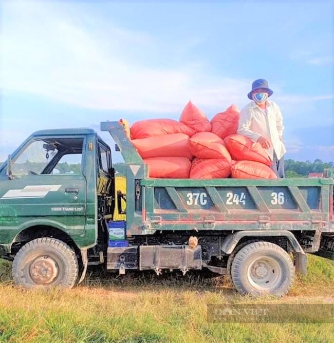 """Nghệ An: Nông dân tự giác phòng dịch, """"áo xanh"""" gặt lúa giúp dân vùng giãn cách xã hội - Ảnh 5."""