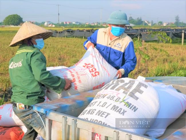 """Nghệ An: Nông dân tự giác phòng dịch, """"áo xanh"""" gặt lúa giúp dân vùng giãn cách xã hội - Ảnh 4."""